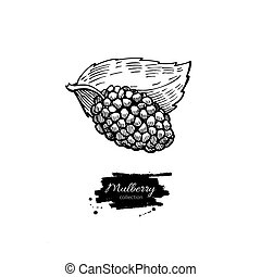 Mulberry vector superfood drawing. Isolated hand drawn illustration on white background. Organic healthy food. Great for banner, poster, label