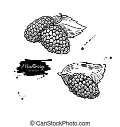 Mulberry vector superfood drawing set. Isolated hand drawn...