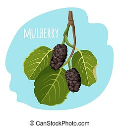 Mulberry with green leaves isolated on blue background. Ripe...