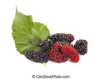 Mulberry with leaves isolated on white background