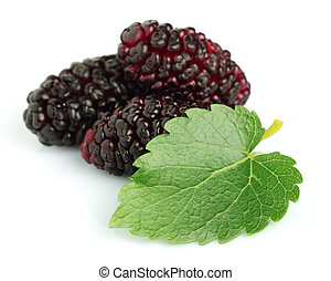 Mulberry with leaves