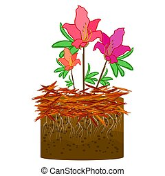 Mulch gardening concept with azalea, red mulch and soil ...
