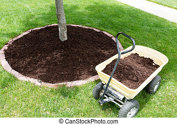 Mulch work around the trees growing in the backyard during...
