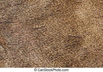 Mule Deer Fur - mule deer fur background texture image