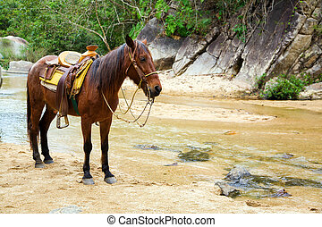 Mule - Image of a mule under saddle standing near a creek
