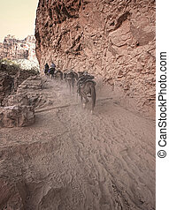Mule Train in the Desert - Mule Train uphill at Havasu Falls...