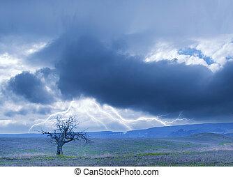 mulen sky, och, ensam, träd