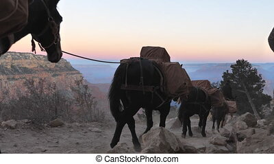 Mules convoy at Grand Canyon with audio - Convoy of Mules...