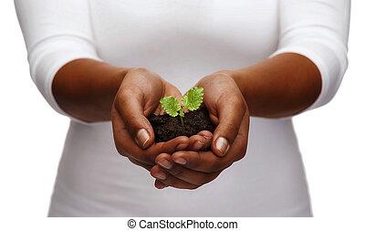 mulher americana africana, mãos, segurando, planta, em, solo