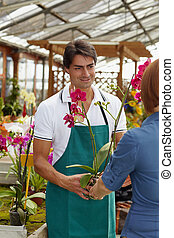 mulher, comprando, orquídeas