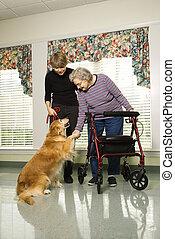 mulher idosa, com, terapia, dog.