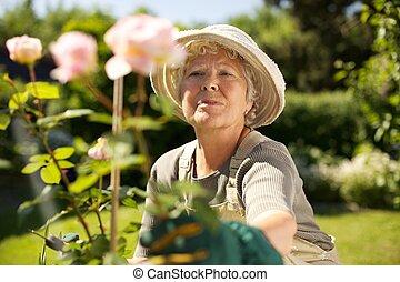 mulher idosa, jardinagem, em, quintal