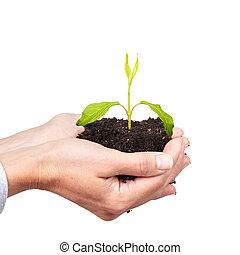 mulher, mãos, com, verde, plant.
