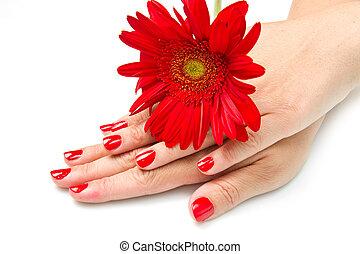 mulher, mãos, com, vermelho, manicure, e, flor vermelha