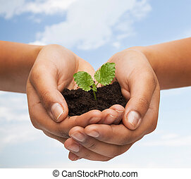 mulher, mãos, segurando, planta, em, solo