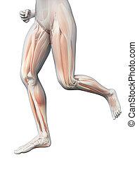 mulher, perna, -, visível, sacudindo, músculos