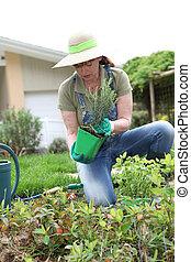 mulher sênior, jardinagem, em, tempo mola