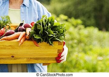 mulher sênior, segurando, caixa, com, legumes