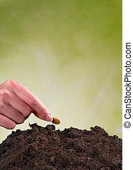 mulher, solo, mão, semente, pilha, semeando