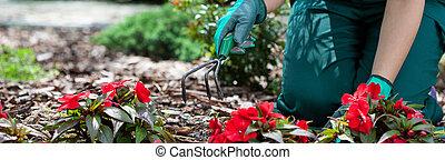mulher, trabalhando, em, jardim