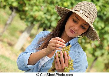mulher, uvas, grupo