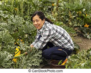 mulheres maduras, colheita, abobrinha amarela, em, jardim