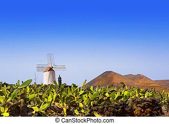 mulino vento, lanzarote, guatiza, giardino cactus