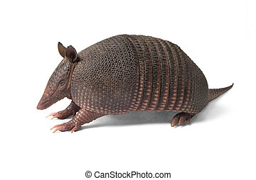 Mulita_2486. - Mulita, Armadillo of six bands, on to white...