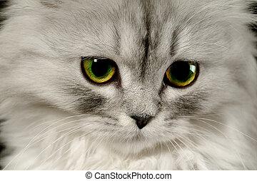 multa, nome, gatto