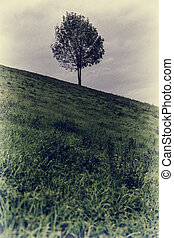 multa, vendimia, arte, árbol verde