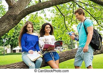 multi étnico, parque, estudantes, cidade, grupo