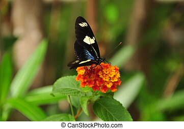 Multi clored butterfly