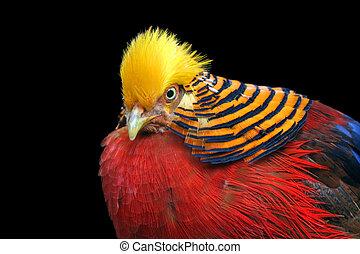 Multi Colored Bird