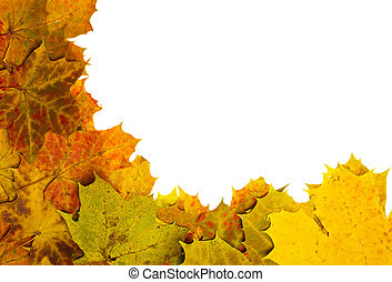 Multi colored fallen autumn leaves as border