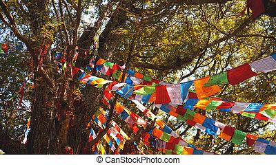 Multi-colored flags hang on the background of trees, large pine and blue sky.