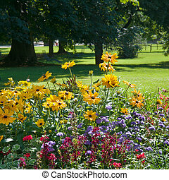 multi colored flower bed