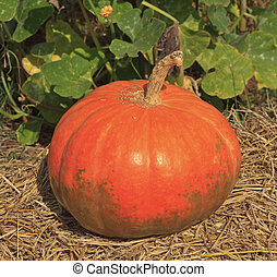 multi colored pumpkins