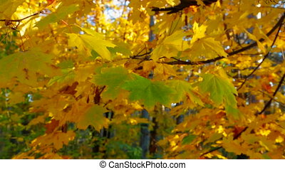 Multi Colored Tree Leaves In Autumn Forest