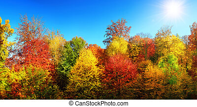 Multi-colored trees in autumn's best weather - Panorama of...