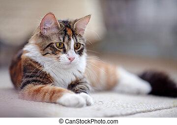 multi-colorido, gato