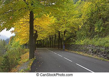 Multi-coloured autumn