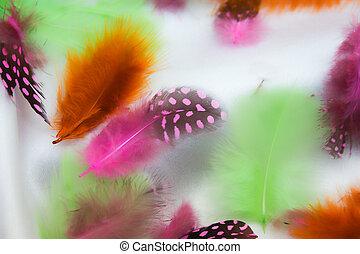 Multi-coloured feathers