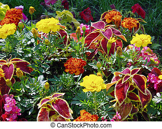 flowers - Multi-coloured flowers, plants,