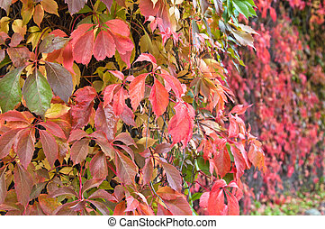 Multi-coloured leaves, background