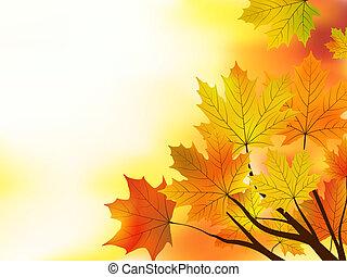 multi färgade, bladen, bakgrund., falla, lönn
