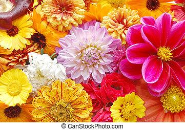 multi färgade, blomningen, mönster, bakgrund
