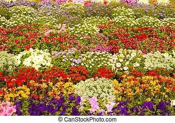 multi farvede, blomster, i, forskellige, planter