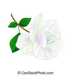 multi, flor, colorido, rosa, caule, vector.eps