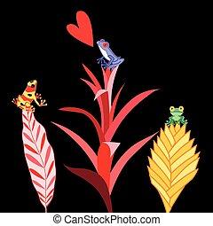 multi, grenouilles, coloré