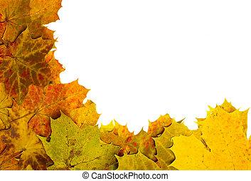 multi kleurig, gevallen, autumn leaves, als, grens
